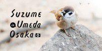 works_suzume