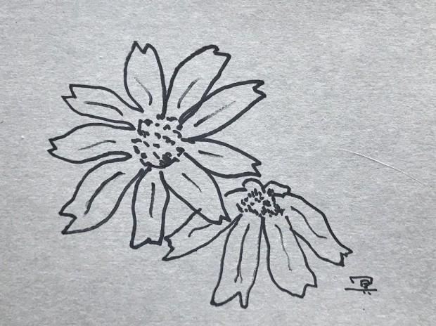 NeoL_URANOMORI_FUJISHIROMEISA4